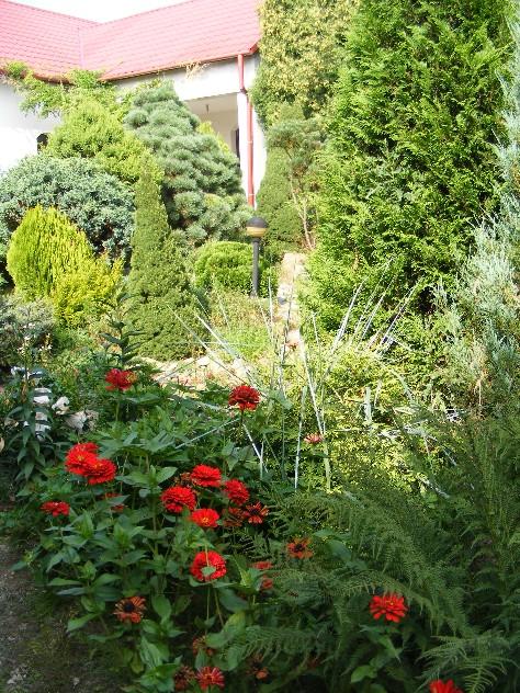 Ogród skalny z dużymi iglakami